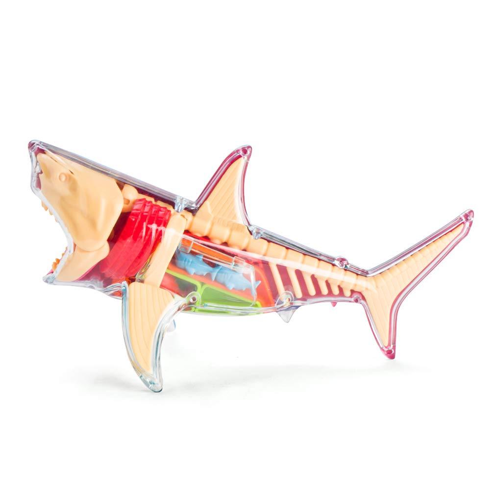 4d Master X Ray Fun Shark Anatomy Model Bluemulticolor Amazon