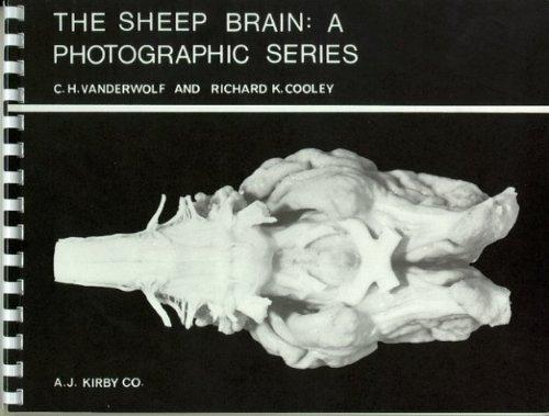The Sheep Brain: A Photographic Series by C. H. Vanderwolf (2002-05-01)