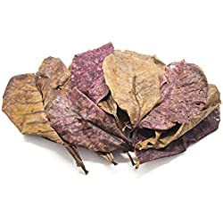 Aquatic Arts 50 Giant Catappa Indian Almond Leaves (4.5-6+ inches) - Dried/Cleaned for Aquarium Use - For Live Freshwater Shrimp, Snails, Fish (Betta, Otocinclus) Tank Health