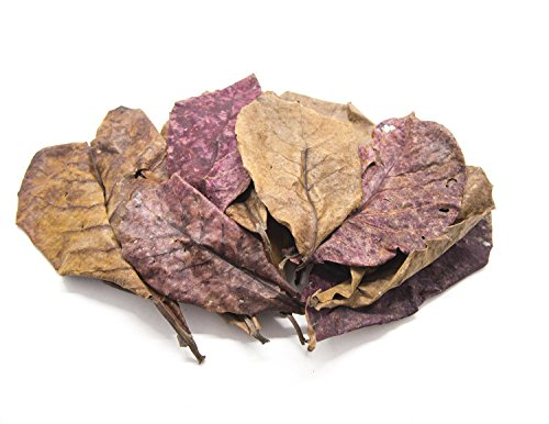Aquatic Arts 10 Giant Catappa Indian Almond Leaves (4.5-6+ inches) - Dried/Cleaned for Aquarium Use - for Live Freshwater Shrimp, Snails, Fish (Betta, Otocinclus) Tank Health