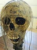 "Halloween Horror Movie Prop Human Corpse Skull Head "" Creep Carol"""