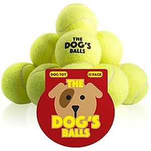 Der Hundeball - 12 Pack extra haltbare Tennisbälle für Hunde - Hundebälle die...