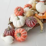 Factory Direct Craft Package of 24 Assorted Harvest White and Frosted Pumpkins and Gourds for Halloween, Fall and Thanksgiving Decorating & Displaying
