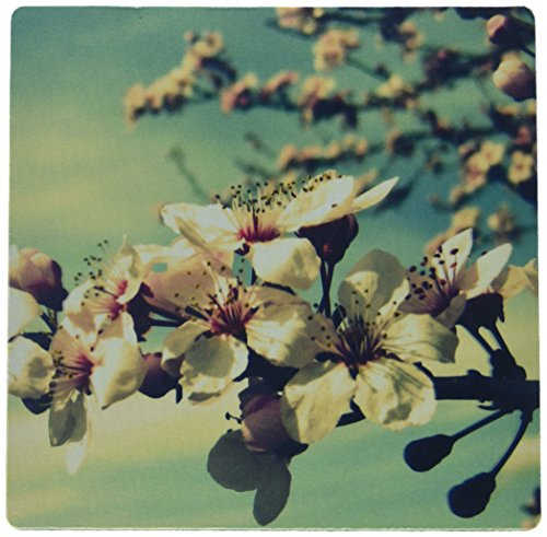 3drose-llc-8-x-8-x-025-inches-mouse-pad-zen-flowering-tree-cherry-blossoms-flowers-photography-mp-40