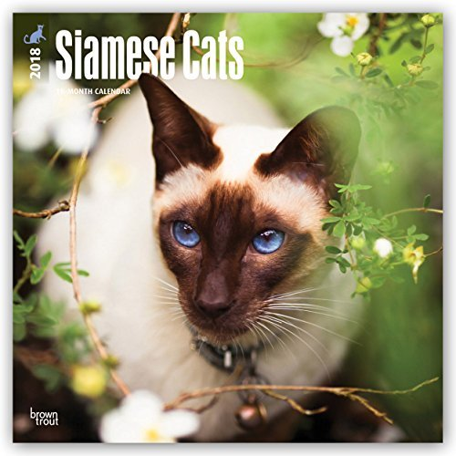 Siamese Cat Cat (Siamese Cats 2018 12 x 12 Inch Monthly Square Wall Calendar, Animals Cats (Multilingual Edition))