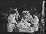 foto laboratory - 1942 Photo Preparing cabbage for dehydration. Regional agricultural research laboratory, Albany, California Location: Alameda County, Albany, California