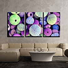 "wall26 - 3 Piece Canvas Wall Art - Colorful Collection of Sea Urchin Shells with a Variety of Sizes - Modern Home Decor Stretched and Framed Ready to Hang - 16""x24""x3 Panels"