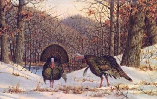 Owen Gromme - Early Spring - Gobblers -