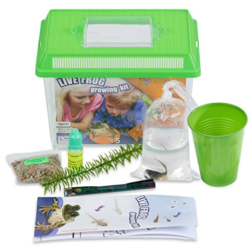 Nature Gift Store Tadpole to Frog Growing Kit with CERTIFICATE for 1 Free Live Tadpole Later