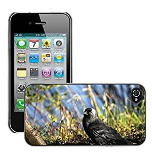 Super Stella Slim PC Hard Case Cover Skin Armor Shell Protection // M00148972 Bird Raven Jackdaw Raven Bird Black // Apple iPhone 4 4S 4G