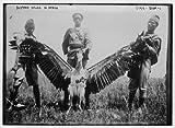 1900 Photo Buzzard killed in Africa