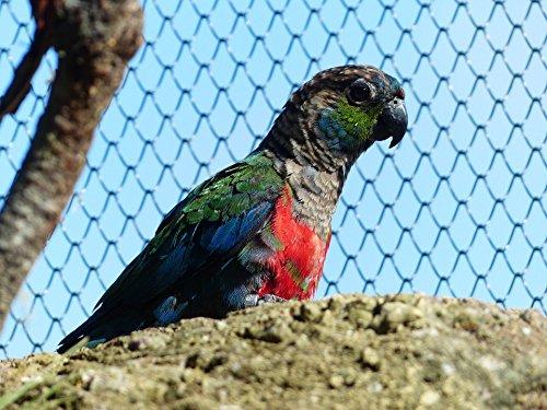 Home Comforts Canvas Print Rotbauchsittich Pyrrhura Bird Cage Conure Parakeet Stretched Canvas 10 x 14 ()