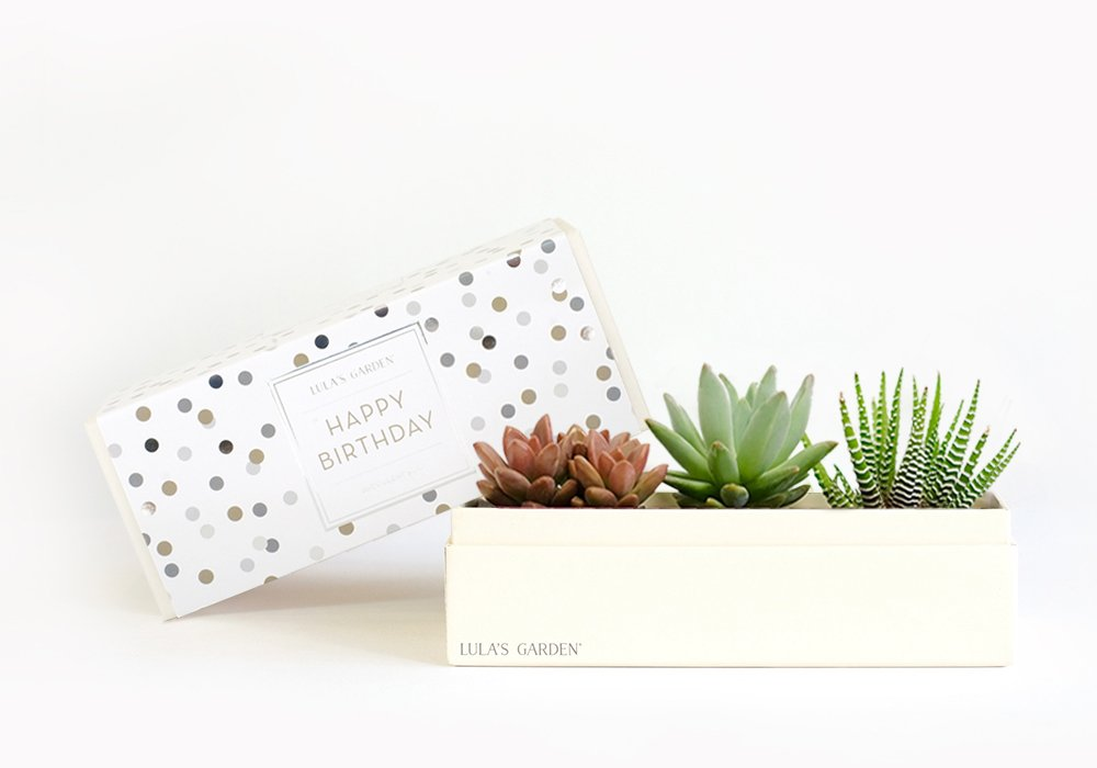 Live Succulent Plant - Garden Centerpiece with Happy Birthday Gift Box - Perfect and Unique Gift for Wife, Mom, Friend, Co-Workers, Boss or Teacher (Jewel Garden, Happy Birthday) by Lula's Garden