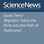 Sooty Terns' Migration Takes the Birds Into the Path of Hurricanes | Sarah Zielinski