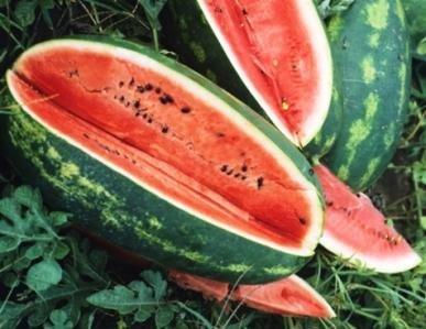 Watermelon Seeds -