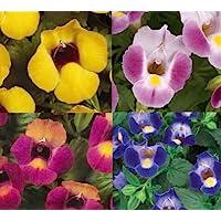NEW! 20+ TORENIA WISHBONE FLOWER SEEDS MIX / ANNUAL