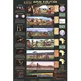 Human Evolution Educational Science Chart Poster Collections Poster Print, 24x36