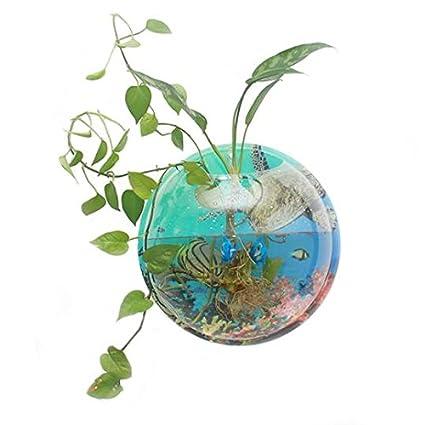 Amazon Com Plant Colored Background Wall Hanging Bubble Aquarium