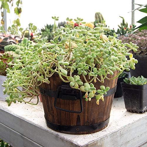 天然木のプランター/植木鉢、素朴な植木鉢,Brown-D-44×33cm