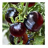 David's Garden Seeds Tomato Cherry Indigo Rose SL3616 (Black) 25 Non-GMO, Organic Seeds