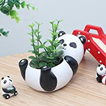 Dsstyle Lovely Panda Shaped Succulent Plants Container Small Natural Cartoon Flowerpot as Ornaments