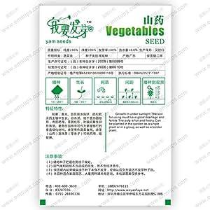 paquete original Semillas chino Yam perennes opposita semillas de hierbas / vegetales Dioscorea - 6 piezas