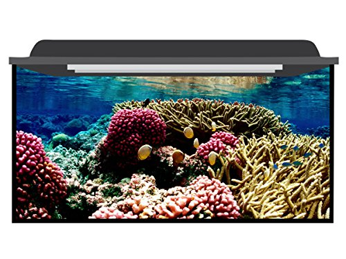Deep Blue Themes Reef Colors Aquarium Background (>210 Gallons (100Wx40H)) by Deep Blue Themes