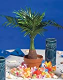 mini palm tree - Mini Palm Tree Centerpiece