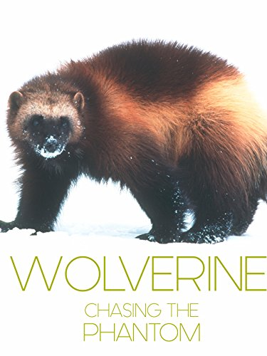 Wolverine: Chasing the -
