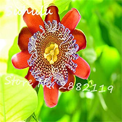Exotic Passion Fruit Seeds 60 Particles Purple Passiflora edulis Passion Flower seeds Diy Home Garden Planting Outdoor Plant 10