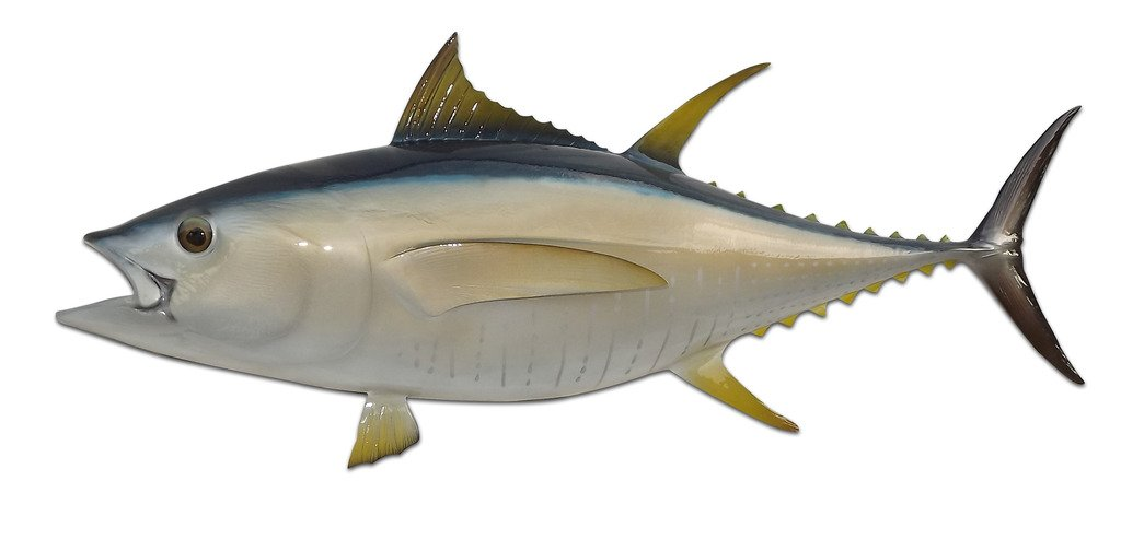 46'' Yellowfin Half Mount Tuna Fish Wall Mount Fish Replica Trophy, For Restaurant Owners, Vacation Homes, Outdoors and Indoors, Fish Replicas by Mount This Fish Company…