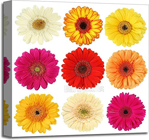 Amazon.com: Barewalls Daisy Flower Collection Gallery Wrapped Canvas Art (6in. x 6in.): Home & Kitchen