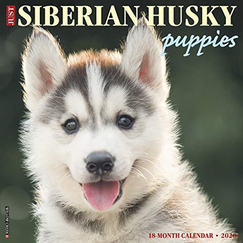 Just Siberian Husky Puppies 2020 Wall Calendar (Dog Breed Calendar)
