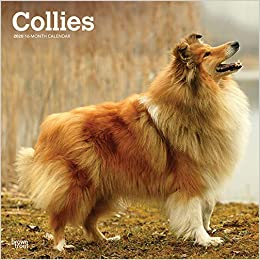 Collies 2020 Calendar