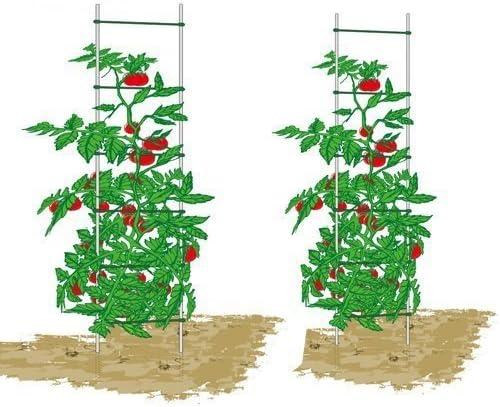 EcoTrellis, escalera extensible para plantas, escalera de soporte ...