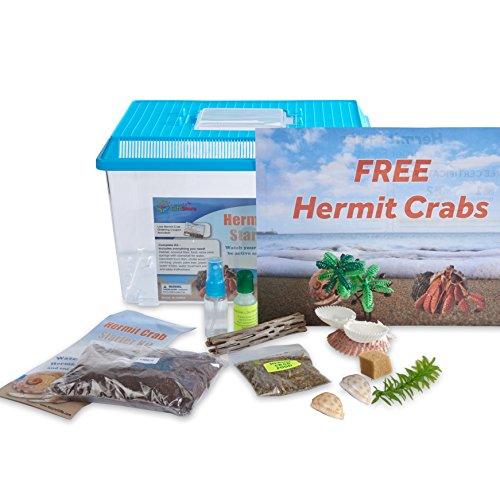 Nature Gift Store LIVE Pet Hermit Crab Kit: 2 Live Crabs FREE Mail-In Certificate