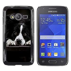 Be Good Phone Accessory // Dura Cáscara cubierta Protectora Caso Carcasa Funda de Protección para Samsung Galaxy Ace 4 G313 SM-G313F // Border Collie Black White Dog Pet Canine