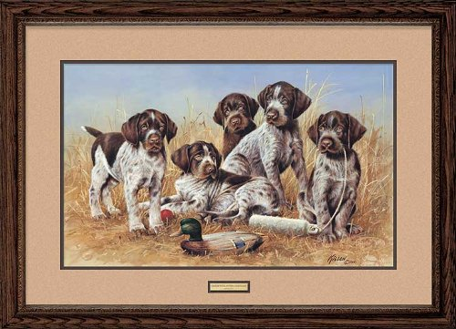 Great Hunting Puppies - Drahthaars Framed Limited Edition Print by Jim Killen