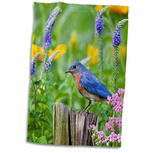 Bluebird Towel (3D Rose Eastern Bluebird on Fence Post in Flower Garden Marion Co. IL twl_205568_1 Towel, 15