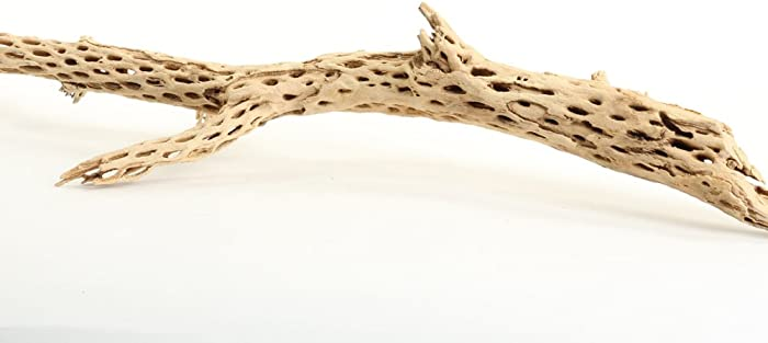 Top 9 Wood Branches Dried For Decor