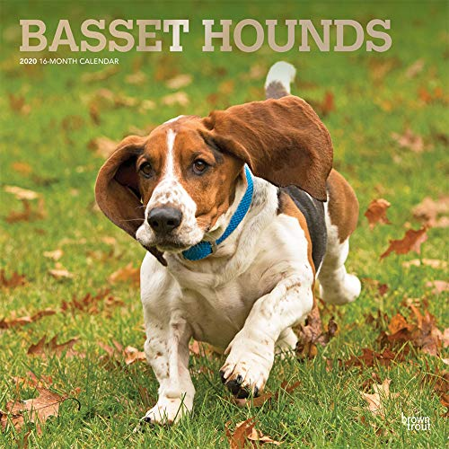 Basset Hounds 2020 12 x 12 Inch Monthly Square Wall Calendar with Foil Stamped Cover, Animals Dog Breeds Hound