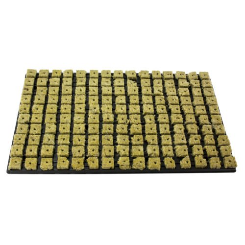 15x Grodan Tray 150 Anzuchtmedien aus Steinwolle je block 2,5cm x 2,5cm in Kunststoffschale 53cm x 32 cm inkl. Greenception Wuchs Dünger 100g