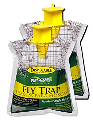 Giant Fly Relief - 9