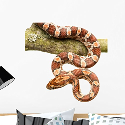 Wallmonkeys Corn Snake Wall Decal Peel and Stick Graphic (24 in H x 24 in W) - Decals Wall Snake