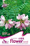 New 1 Original Pack, 50 ''Seed/Pack, Coronilla Varia Crown Vetch Hardy Ground Cover Flower