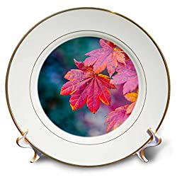 3dRose Alexis Photography - Seasons Autumn - Red leaves of a Japanese maple tree in autumn, bluish background - 8 inch Porcelain Plate (cp_270381_1)