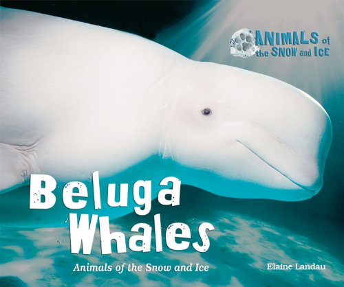 Whale Snow (Beluga Whales: Animals of the Snow and Ice)