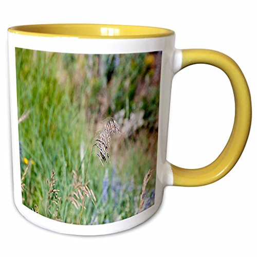 3dRose Jos Fauxtographee Realistic - A Weed Floating in the Wind on a Grassy Weed Backdrop with Spots of Blue and Yellow - 11oz Two-Tone Yellow Mug (mug_47445_8)