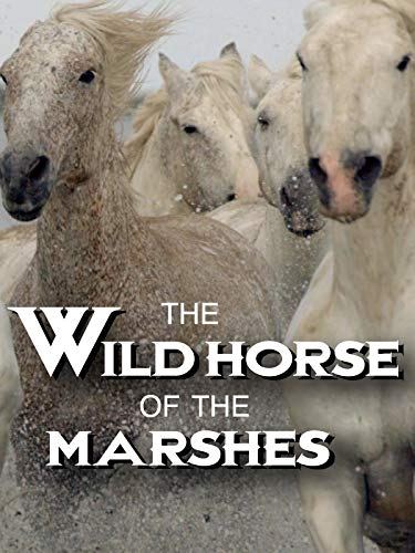 The Wild Horse of the Marshes (Free Horses)