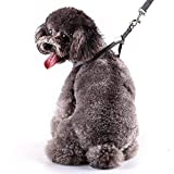 RYPET Small Dog Harness and Leash Set - No Pull Pet Harness with Soft Mesh Nylon Vest for Small Dogs and Cats